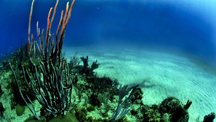El 70% de los corales del mayor arrecife de Japón está muerto