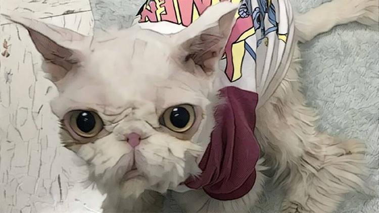 FOTOS: Salvan a un gato 'atrapado' en su propio pelo