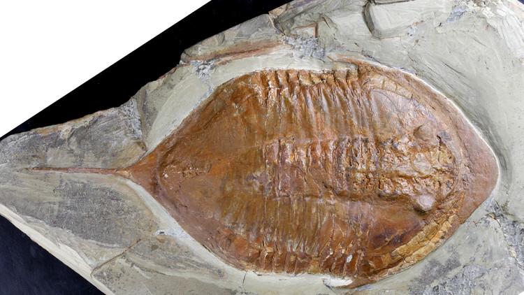 Así caminaba el fósil más conocido del mundo hace 478 millones de años