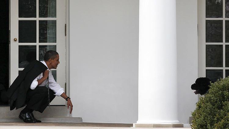 La perra de los Obama muerde a una joven en la Casa Blanca (FOTOS)