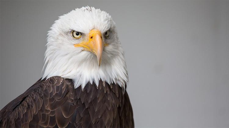 """Por qué Washington está """"obsesionado con el liderazgo de EE.UU."""" en el mundo"""