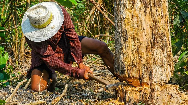 VIDEO: Talan un árbol en Argentina y esto es lo que ven