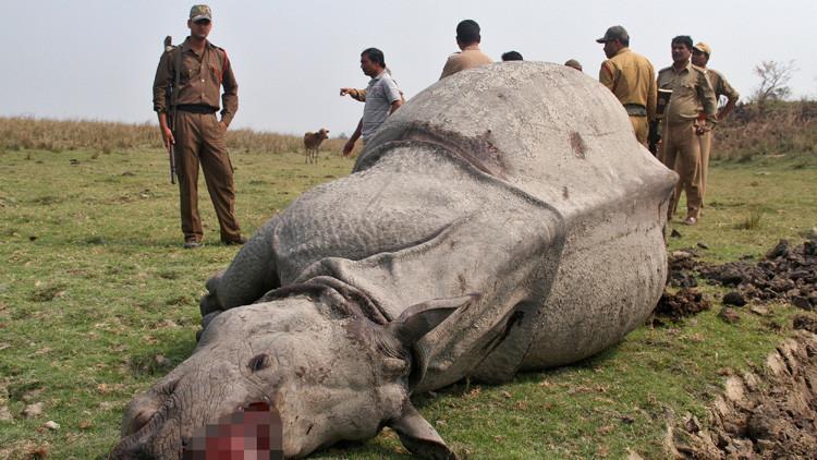 La policía india localiza a los cazadores furtivos de un rinoceronte gracias a sus 'selfies'