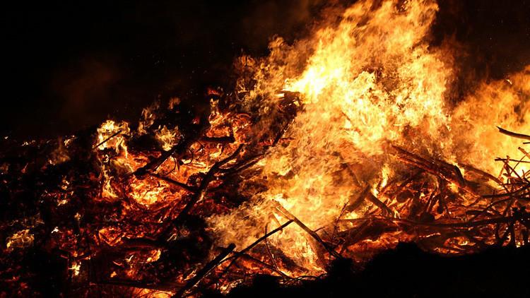 La esperanzadora recuperación de un conejo herido en los voraces incendios de Chile (VIDEO)