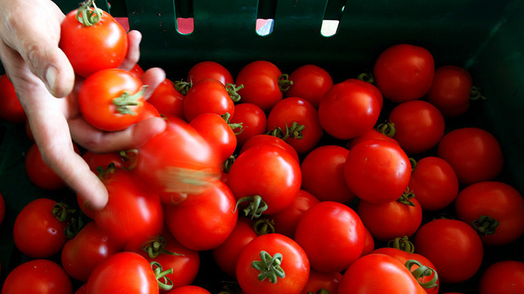 Investigan por qué los tomates ya no saben como antes