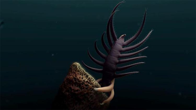 VIDEO: Así 'bailaba' esta criatura de 18 patas hace 500 millones de años