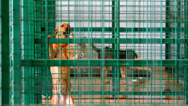 La veterinaria que se suicidó con un fármaco usado en la eutanasia de perros y cambió la legislación