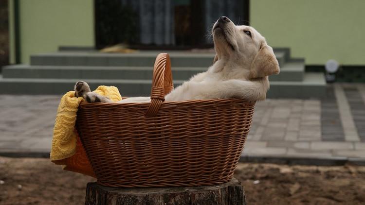 Fotos: Una perra labrador da a luz a un cachorro de color verde