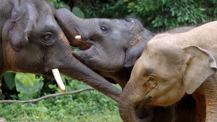China: Elefantes salvajes 'invaden' un pueblo en busca de comida (VIDEO)