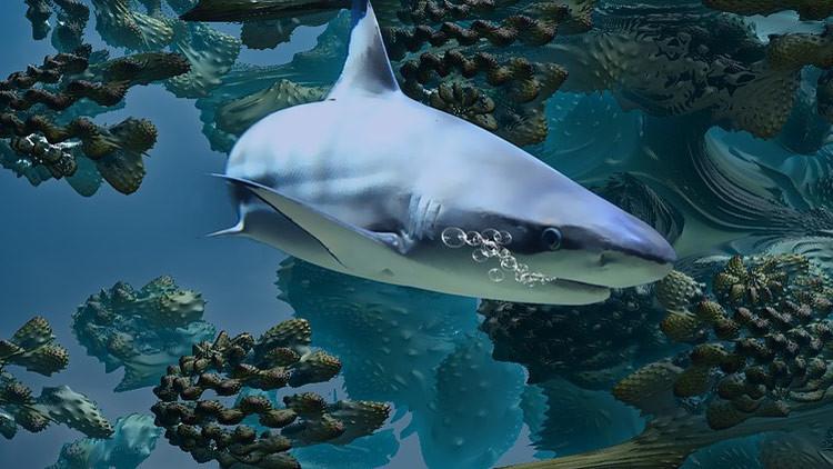 La misteriosa muerte de este tiburón blanco desconcierta a los biólogos (FOTO)
