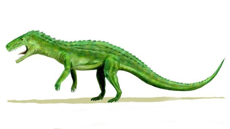 Descubren la primera hembra preñada de un reptil de hace 245 millones de años