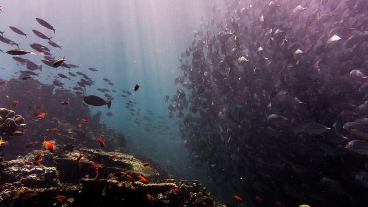 Avistamientos inexplicables de este pez alimentan temores de terremoto en Filipinas (FOTOS)