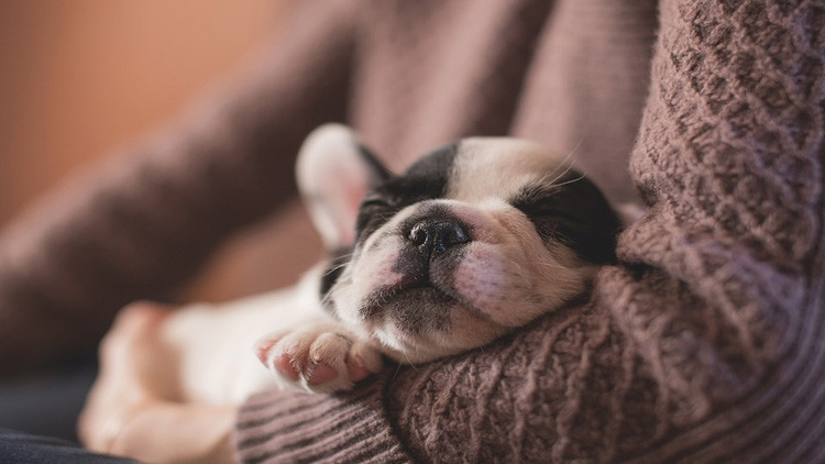 ¿Duerme poco? Descubra cómo sobrevivir en una constante falta de sueño