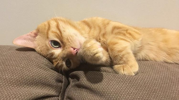 ¿Harto de malas noticias? Relájese viendo el primer 'reality show' protagonizado por gatitos