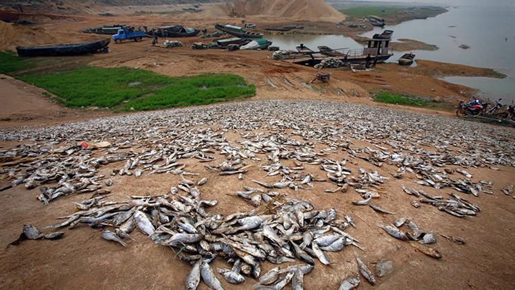 Un grave peligro medioambiental del que nadie habla