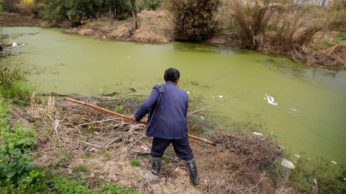 Un agricultor chino estudió Derecho durante 16 años para demandar a una  empresa por contaminación - RT