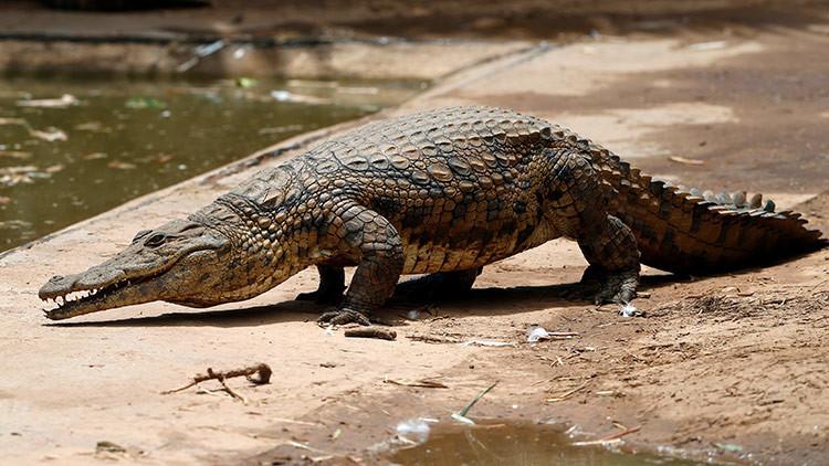 Fotos brutales: Un cocodrilo golpeado hasta la muerte por visitantes de un zoológico