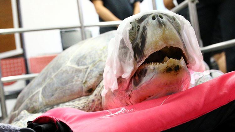Tailandia: Extraen 915 monedas del estómago de una tortuga