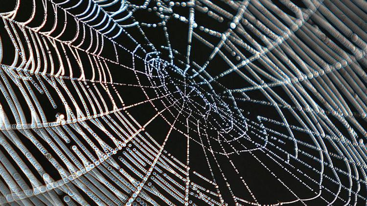 Mientras tanto, en Australia: descubren un aterrador nido de arañas (VIDEO)