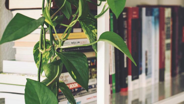 Video: Una planta se marchita en 30 segundos al no soportar palabras de un politólogo
