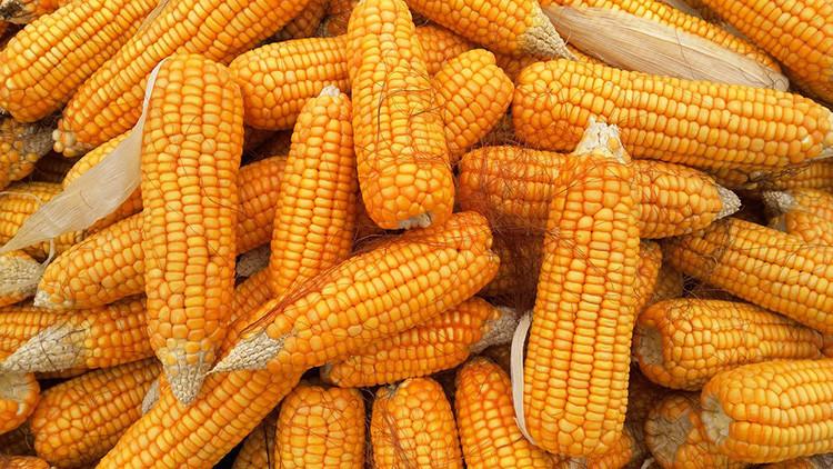 México comprará maíz a Brasil y Argentina en vez de a EE.UU. si sale mal la renegociación del TLCAN