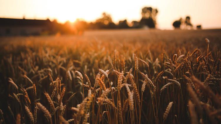 """""""Sería devastador"""": Agricultores de EE.UU. se temen lo peor en caso de guerra comercial con México"""