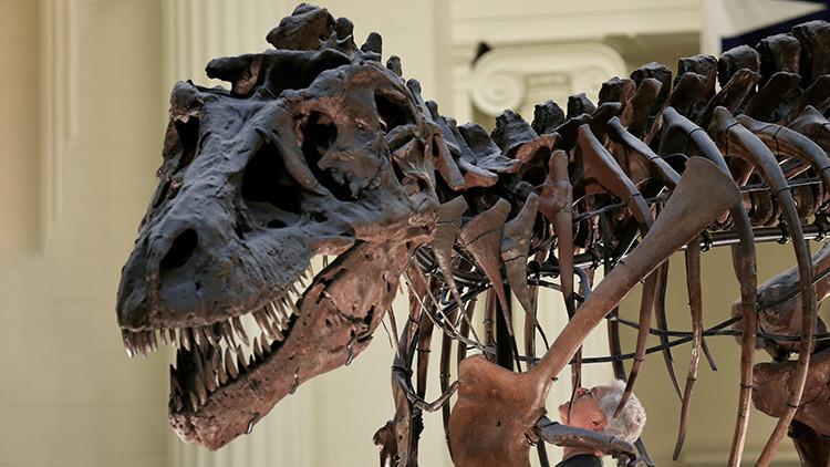 Un revolucionario estudio científico pone 'patas arriba' la clasificación actual de los dinosaurios