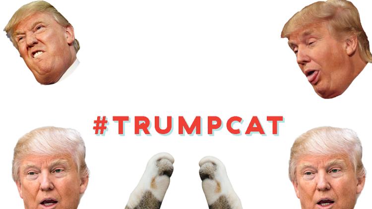 ¿Game over?: Abogados de Trump buscan cerrar una web que permite arañar a Trump con zarpas de gato