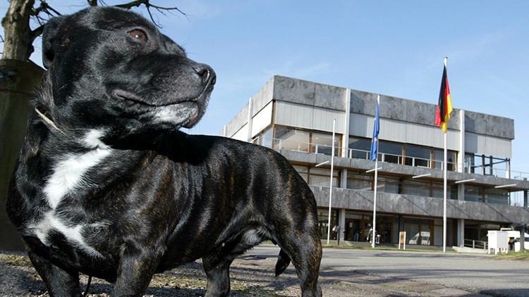 Un hombre muere atacado por su propio perro durante la grabación de un programa de la BBC