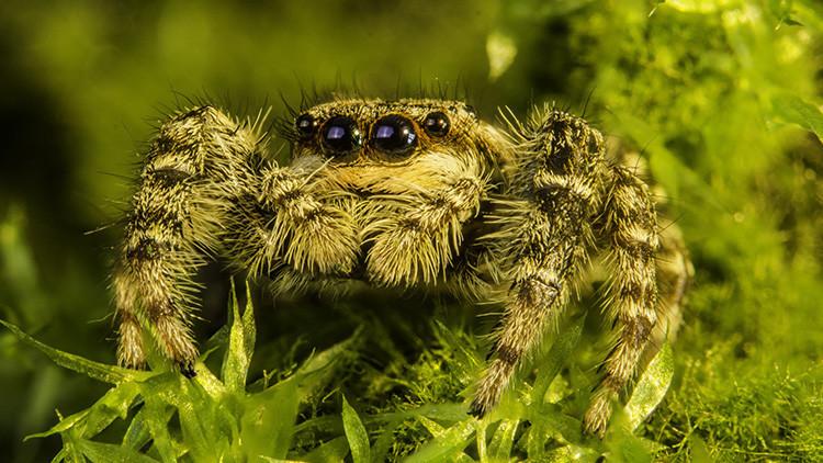 Petición al Gobierno de EE.UU.: Ayude a que las arañas acaben con los humanos en un año