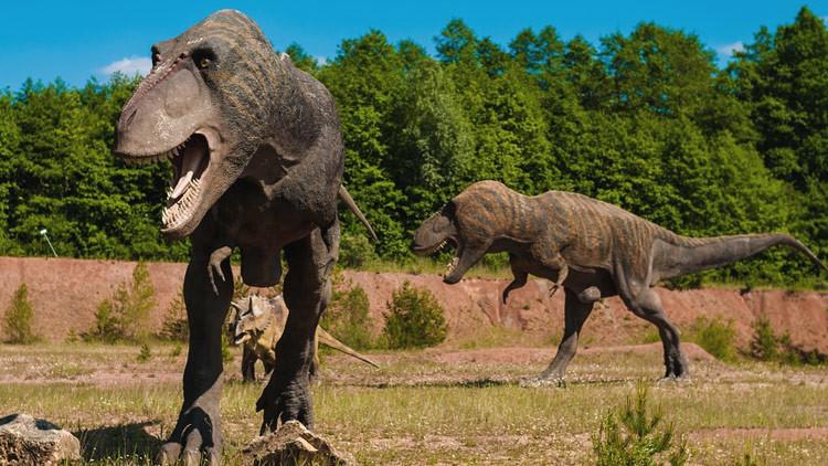 'T-Sex': científicos descubren cómo era el jugueteo previo de los tiranosaurios