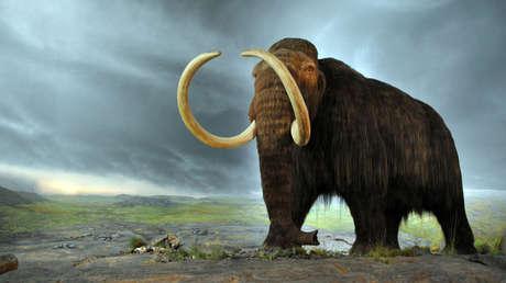 Recreación de un mamut en el museo Royal BC de Victoria, Canadá