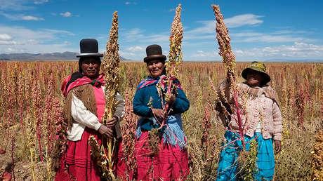 Mujeres bolivianas posan con plantas de quinua en la localidad boliviana de Tarmaya.