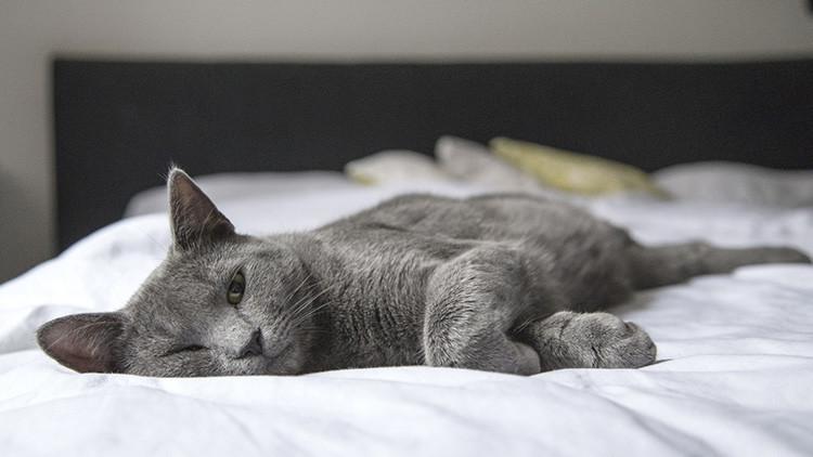 Un estudio revela que la pereza es contagiosa