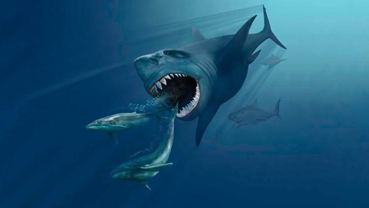 Hallan restos fósiles de un gigantesco tiburón prehistórico en Italia