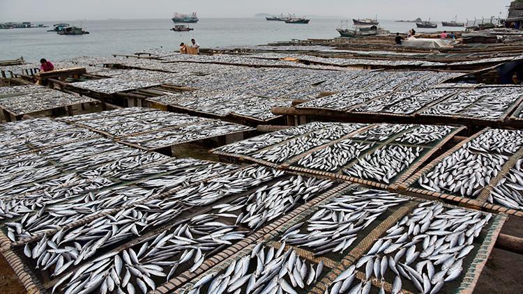 China eleva la tensión por sus agresivos métodos de pesca en aguas internacionales