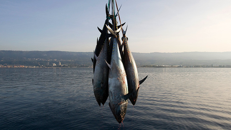 ¿Guerra comercial?: Una ONG de EE.UU. ataca a Walmart por vender atún mexicano que 'mata' a delfines