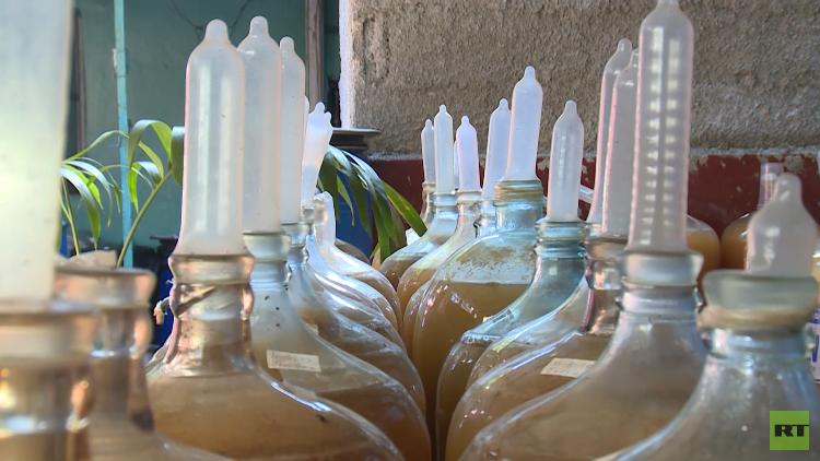 Frutas y condones: el particular método cubano para hacer vino