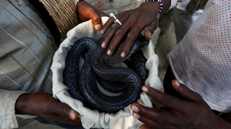 'Beso' mortal: Cobra muerde a un hombre en la mejilla mientras posa para una foto (Video)