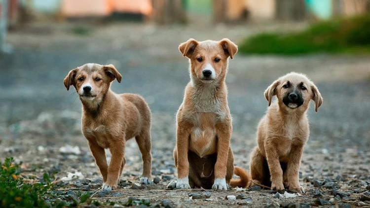Taiwán prohíbe el consumo de carne de perros y gatos