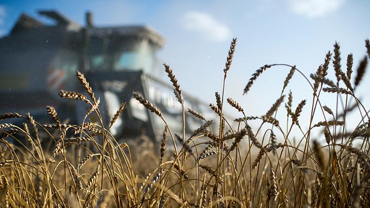 'The Financial Times' se sorprende del auge del sector agrícola en Rusia