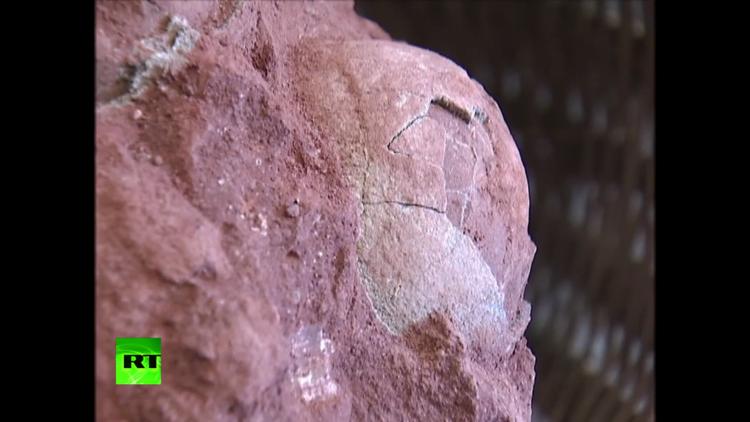 Hallan huevos de dinosaurios que datan de hace 70 millones de años (VIDEO)