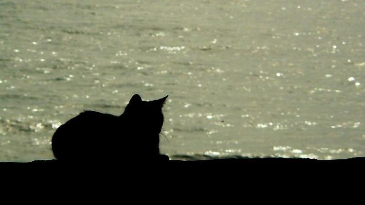¿Seguro que los gatos temen al agua?: Marineros rusos rumbo a Siria publican la foto de su mascota
