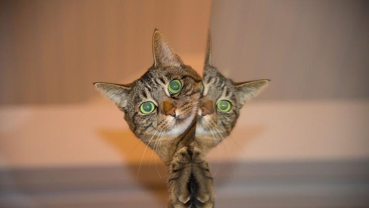 Científicos logran 'criar' un gato de Schrödinger