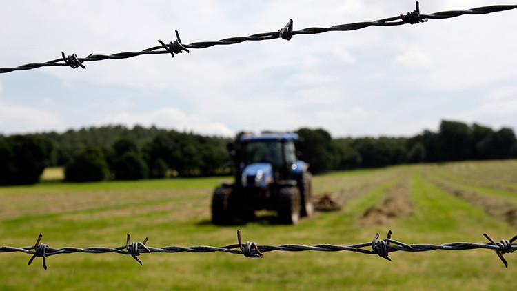 Advierten de que el 'Brexit' podría acabar con la ganadería de un territorio británica