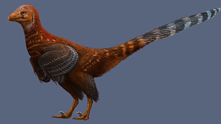 ¿Un faisán prehistórico? Descubren el primer dinosaurio que tenía plumas como los pájaros actuales