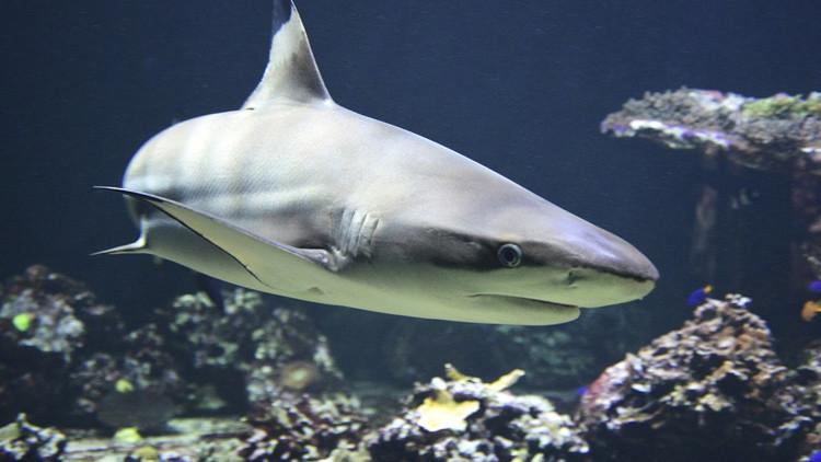 Buscan a un hombre que se abrazó desnudo al cadáver de un tiburón recién capturado (foto 18+)
