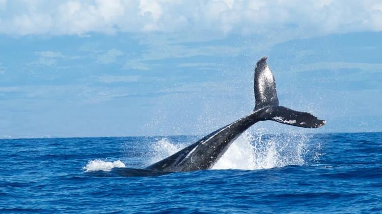 El creador del siniestro juego de 'La ballena azul' se declara culpable de incitación al suicidio