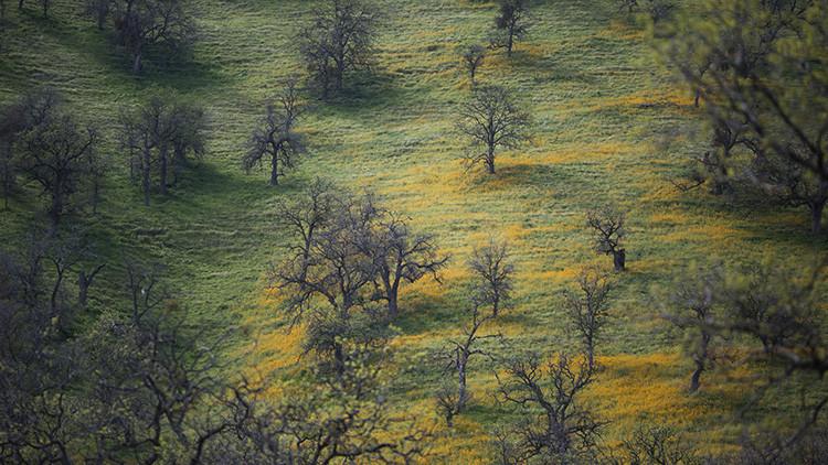 """Descubren bosques """"perdidos"""" en el planeta cuyo territorio es equivalente a la mitad de Brasil"""