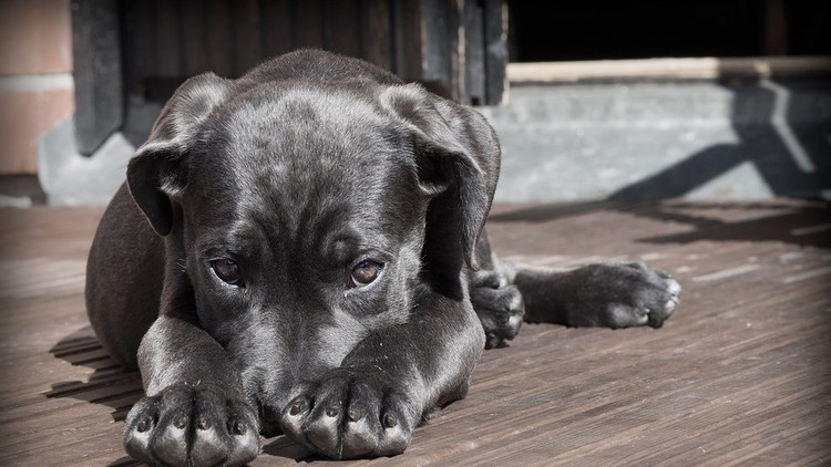 Conmovedoras imágenes: Un perro 'abraza' a su dueño accidentado
